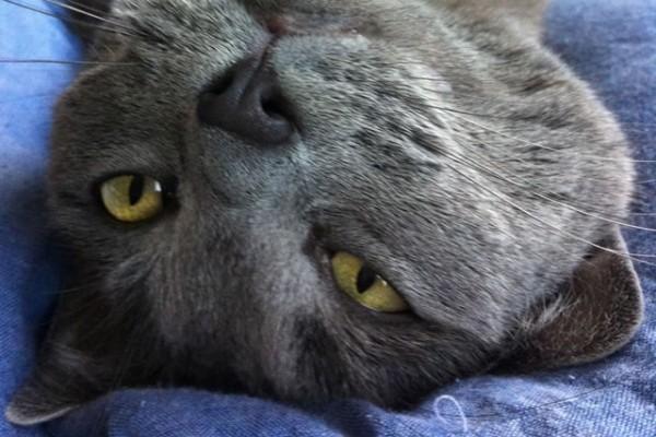 Un chat, un chat.